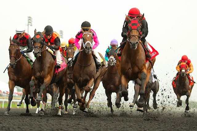 current queen's plate odds