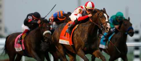 Horse racing betting odds tomorrow world craps betting strategy odds